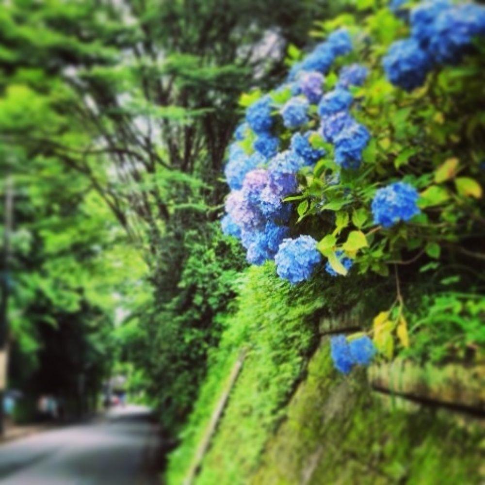 image.jpg by Hiroko