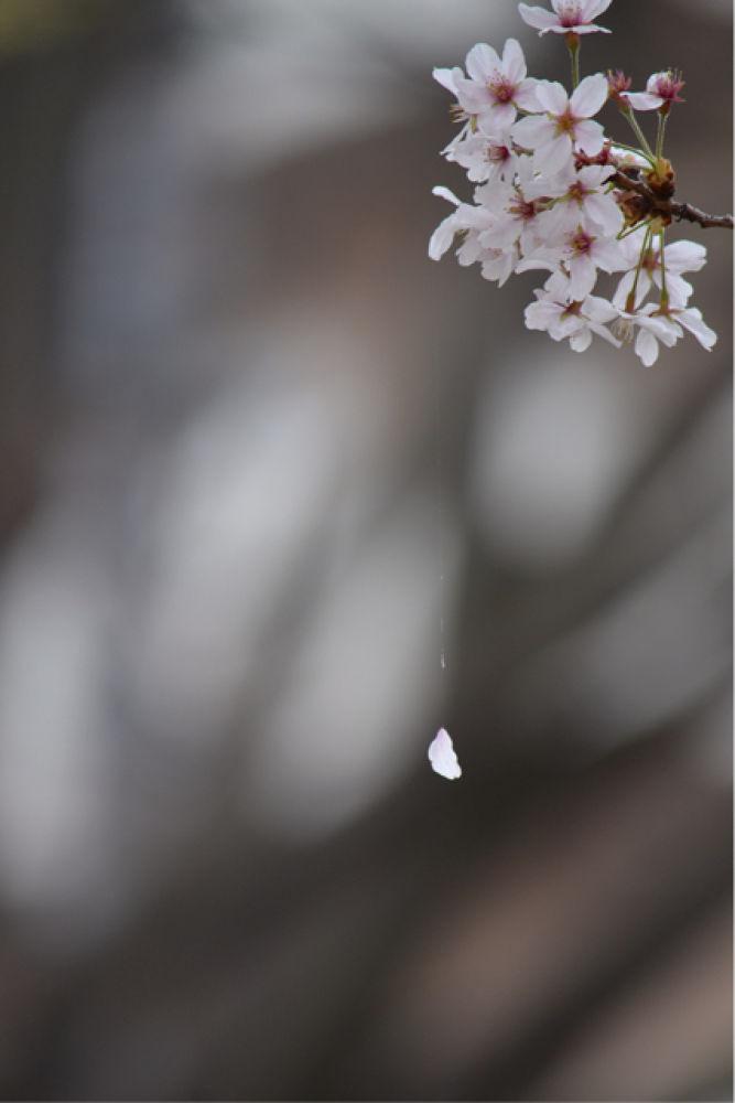 DSC_0516.JPG by Hiroko