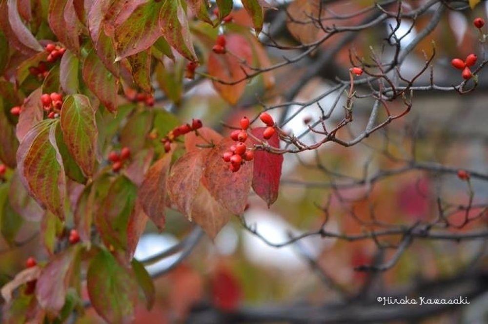 image by Hiroko