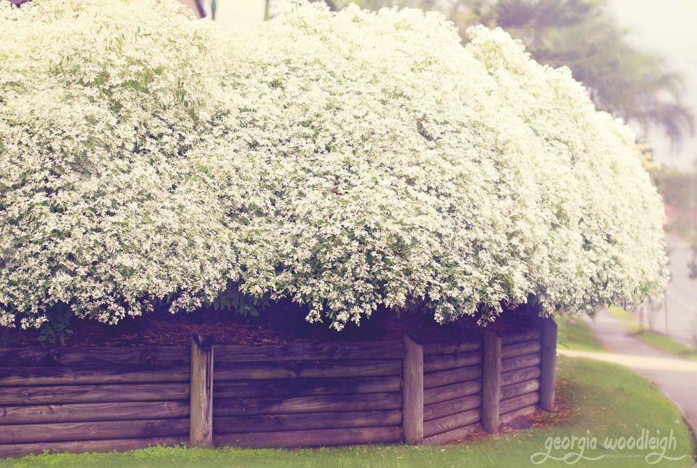 Bloom.jpg by Georgia Woodleigh