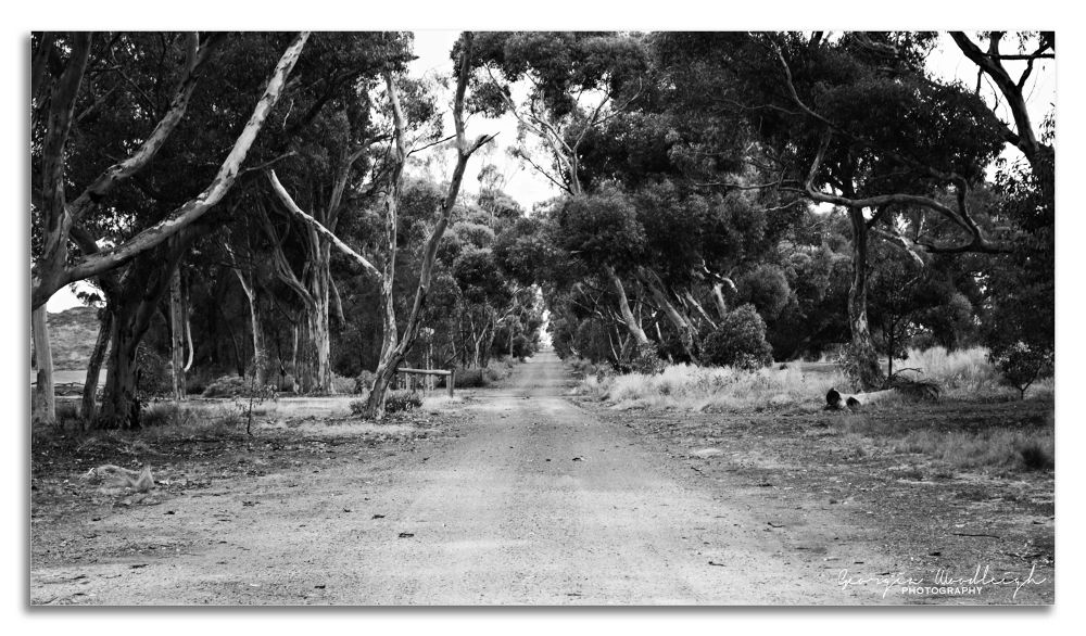 DirtRoad by Georgia Woodleigh