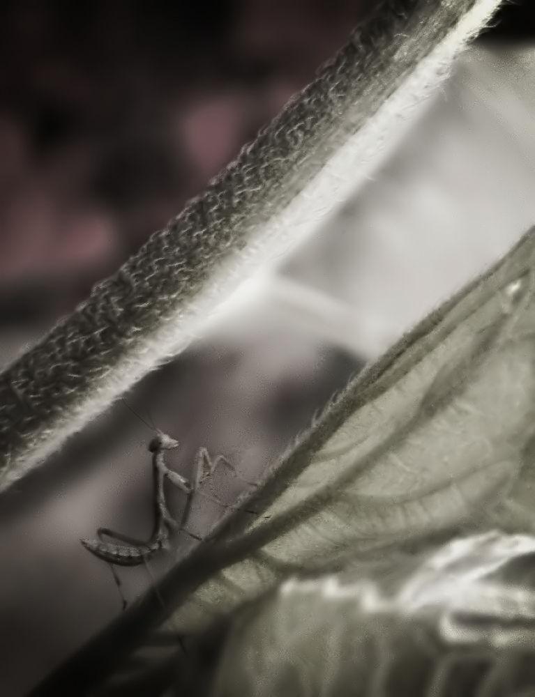 Little Guy in the Garden by FlannelPhotos