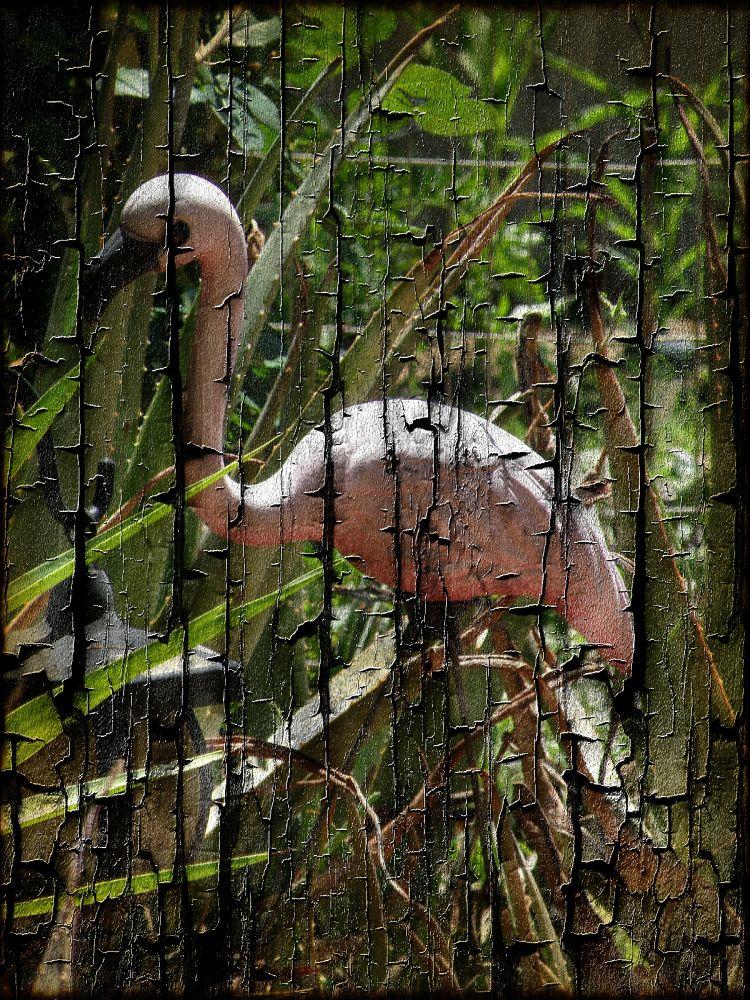 Flamingo by FlannelPhotos
