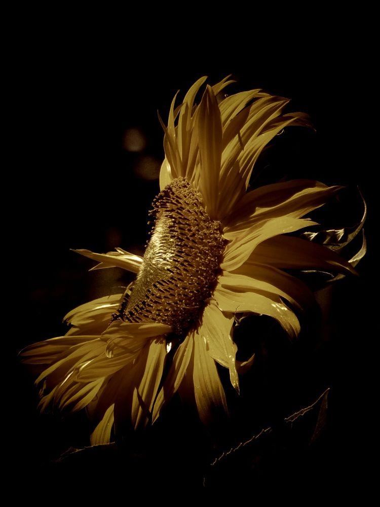 In the sun by FlannelPhotos