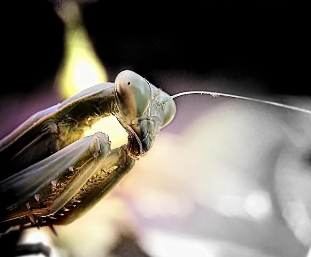 lurker by FlannelPhotos