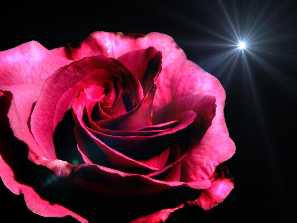 Midnight Rose by FlannelPhotos