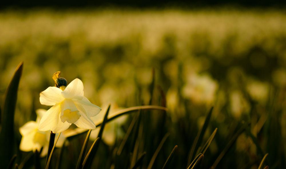 Flower  by Kris Gorynski