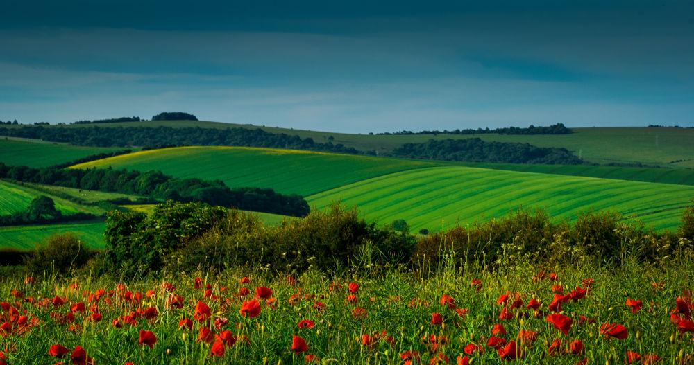 Field  by Kris Gorynski