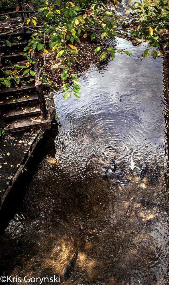 Pond by Kris Gorynski
