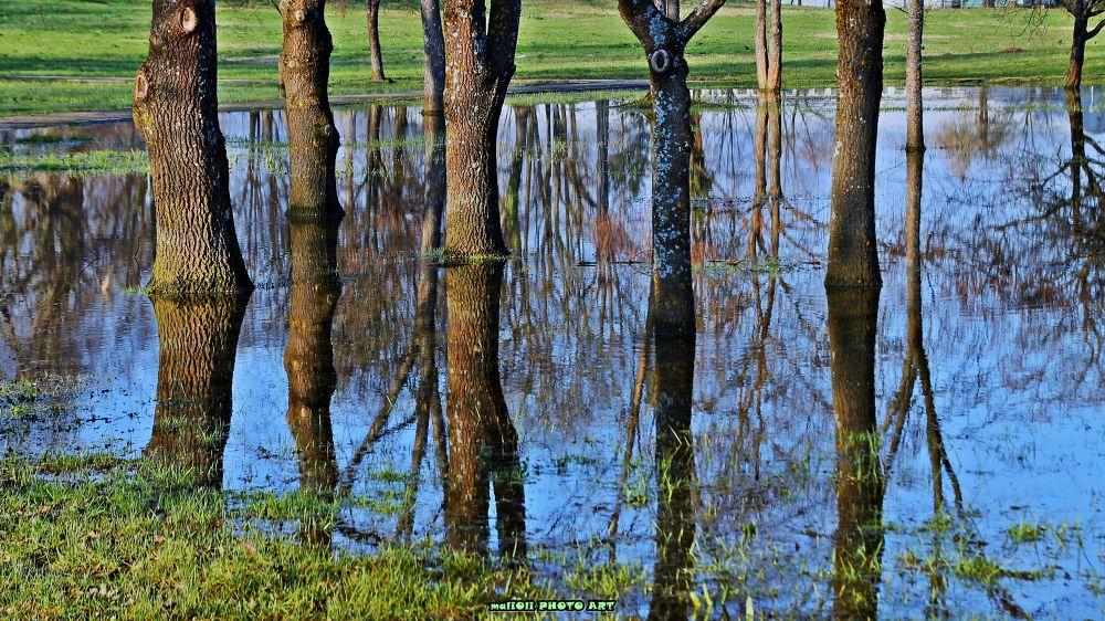 Park after flood by oliversvob
