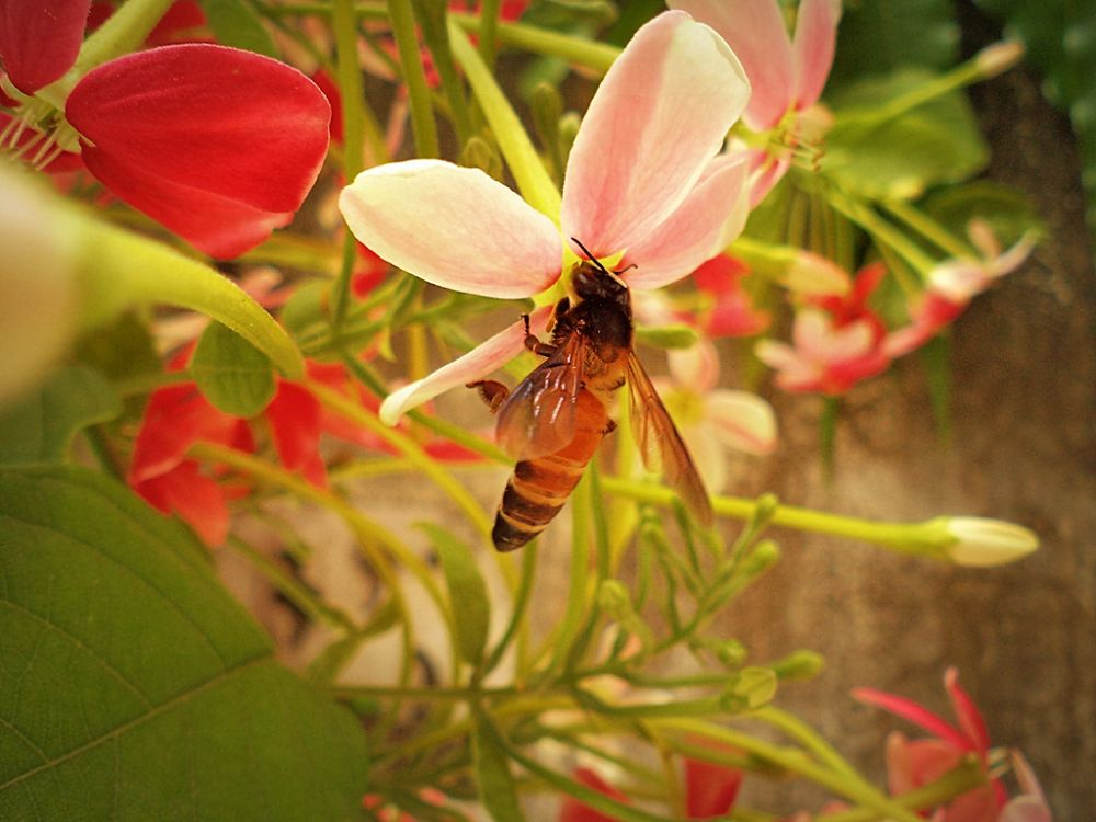 Busy bee by clickonly