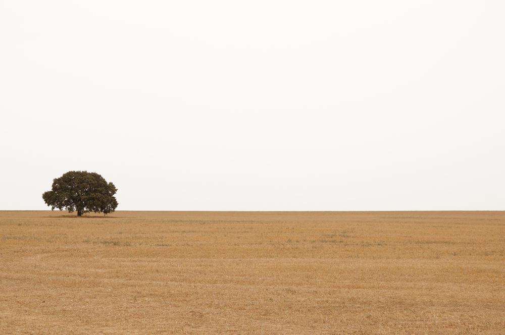 Barren fields by tonigarcia