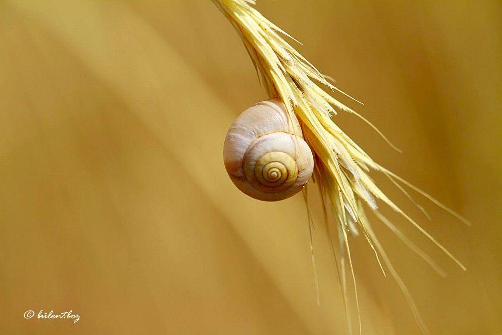snail by bulentboz