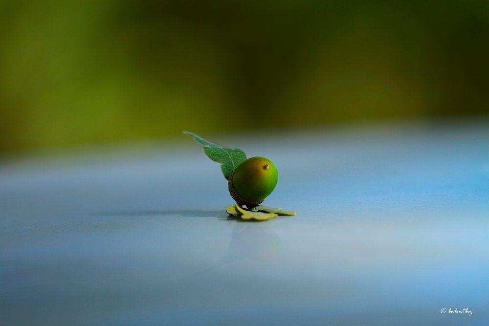 Quercus sp. by bulentboz