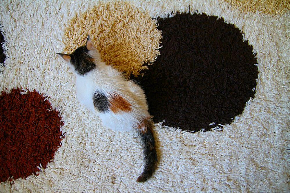 My Cat - Atlas by bulentboz
