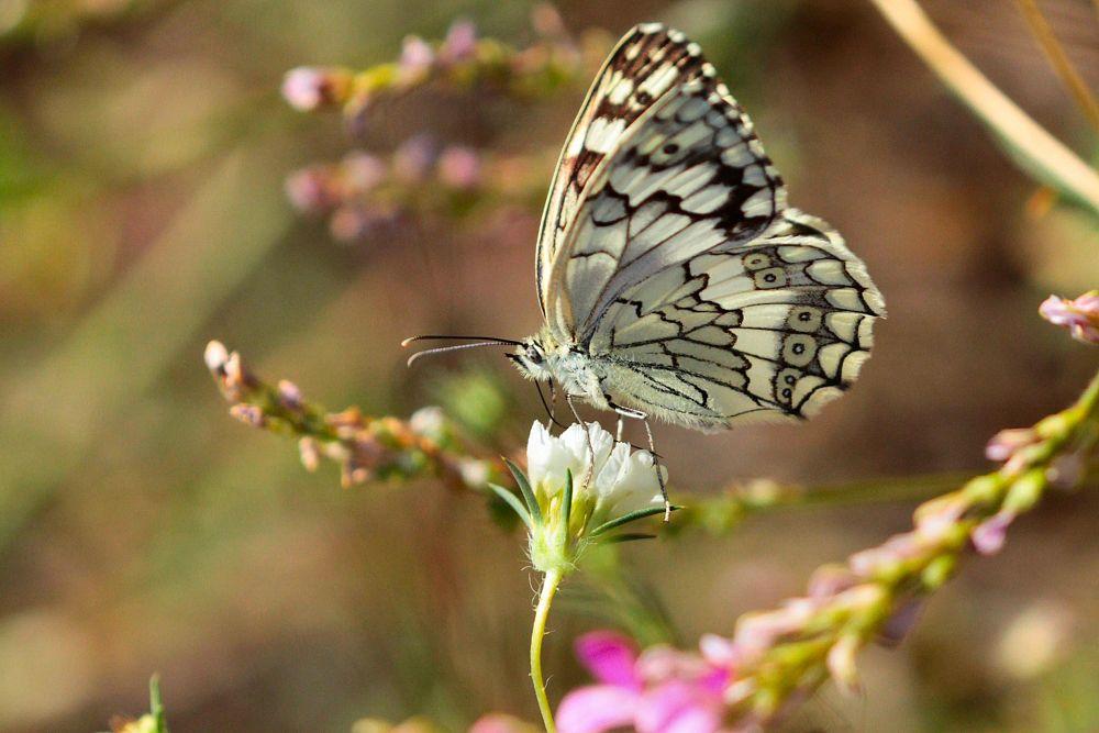 Photo in Macro #butterfly #best #macro