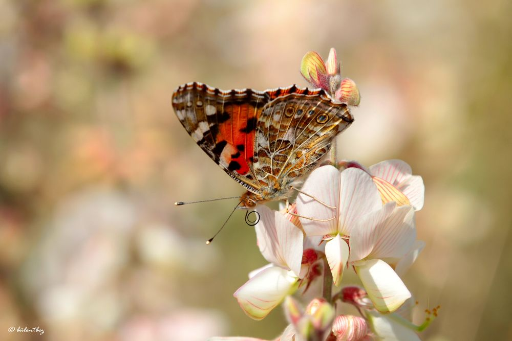 Photo in Macro #best #colors #butterfly #pink #spiral #nude