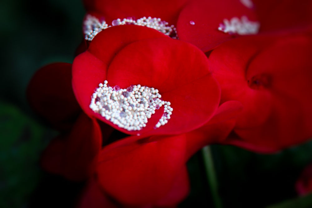sand and red flower by Djoay