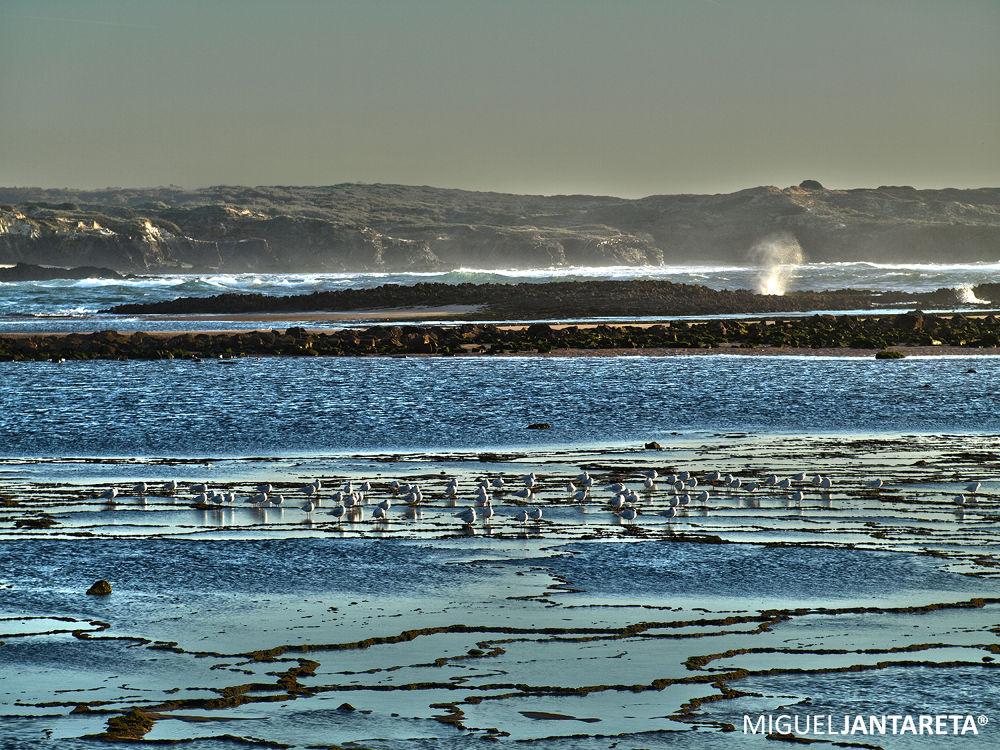 O banho das gaivotas by migueljantareta