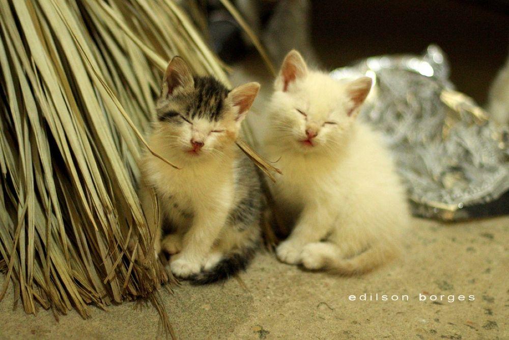 Sleepy Cats by Edilson Borges