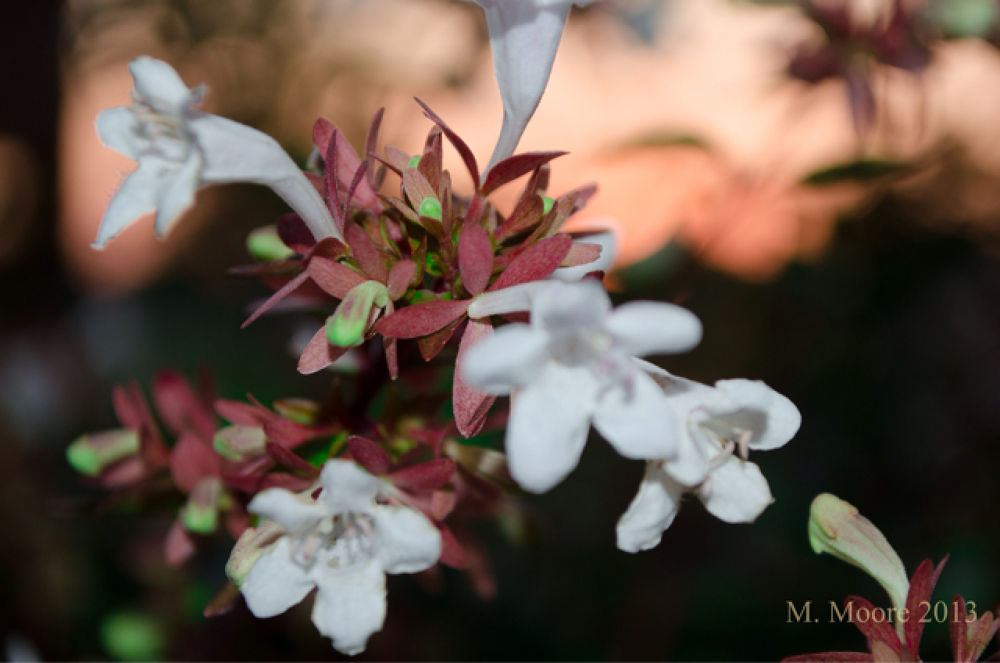 Flower At Sunset by mvmoorephotography