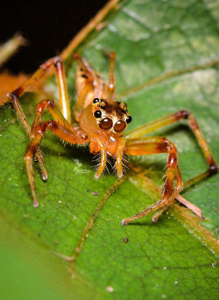 1 Body; 8 Eyes; 8 legs - Spider by guancath