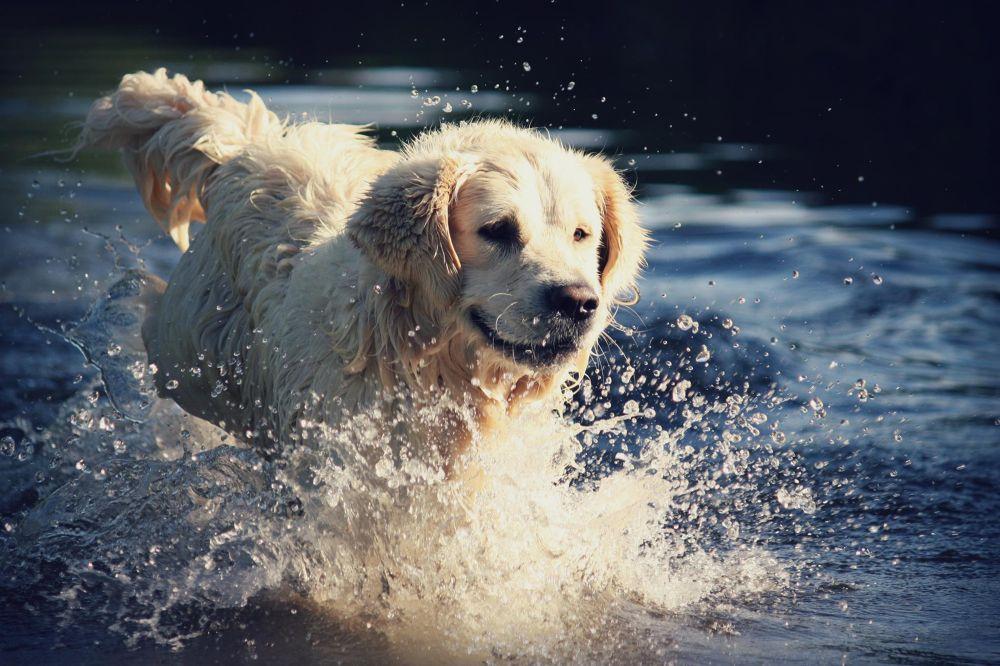 Dog. by nikitatomanova
