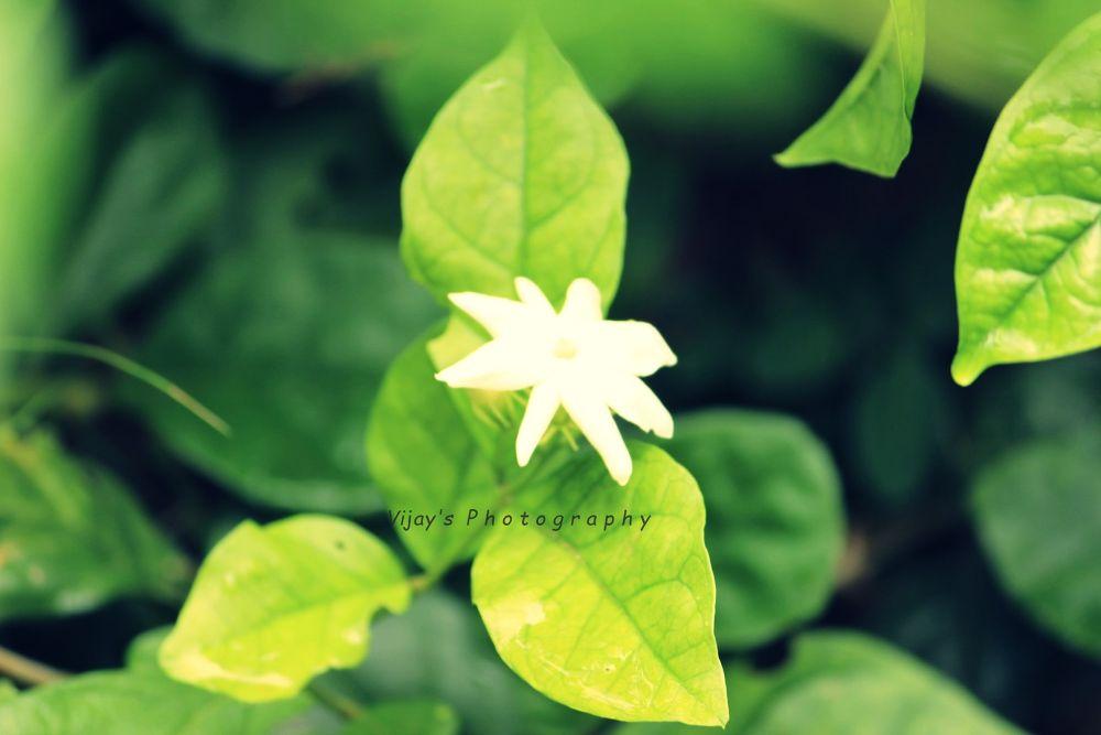 IMG_0927.JPG by vijayabrahamj