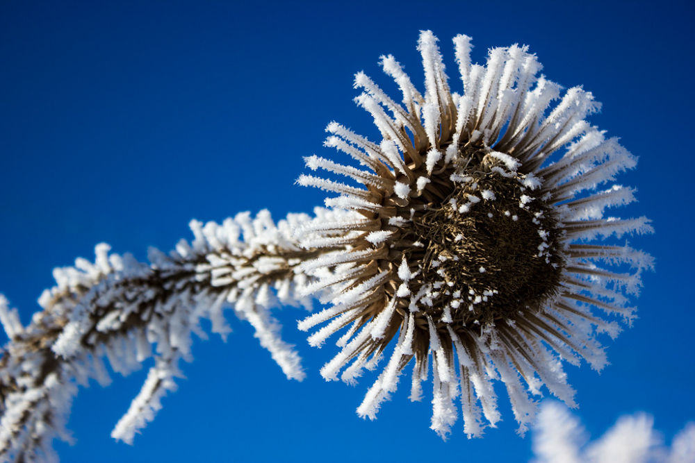 ice flower by hesamg59