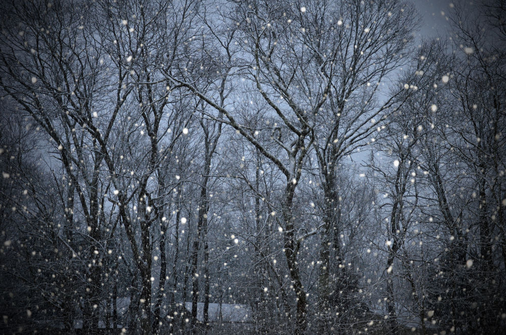 Evening Snowfall by lauspics