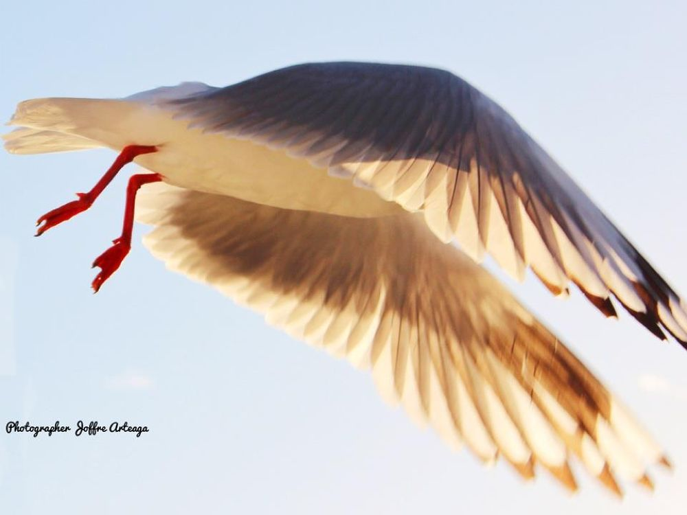In flying motion by joffrearteaga