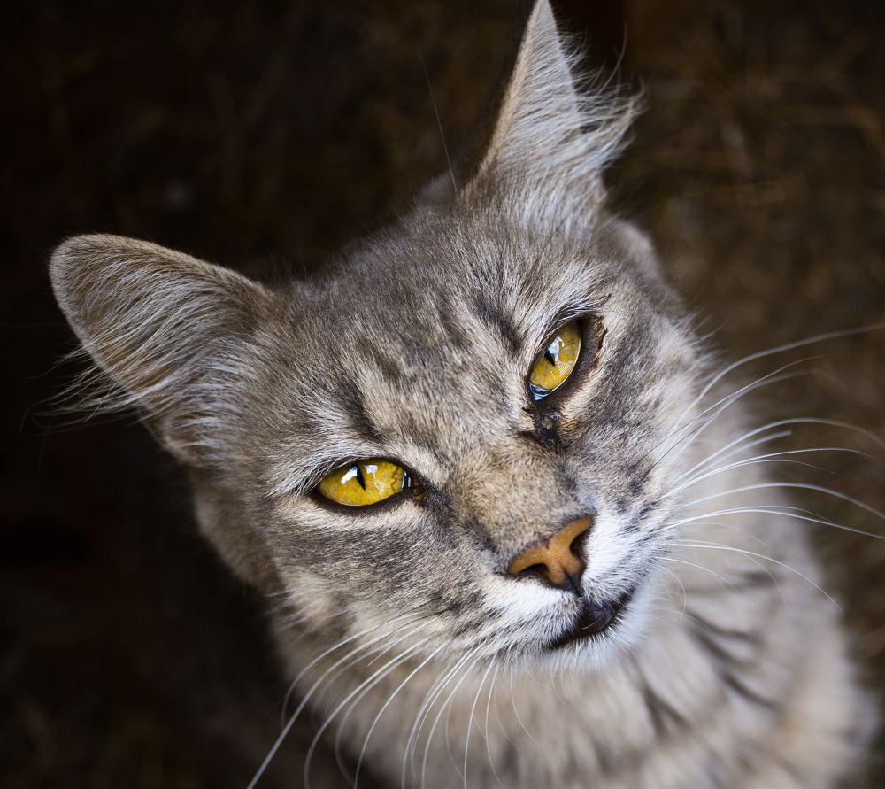 Cat Eyes, Bors, Romania by opreblu