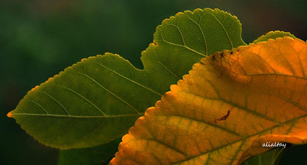 sonbahar... by AliAltay