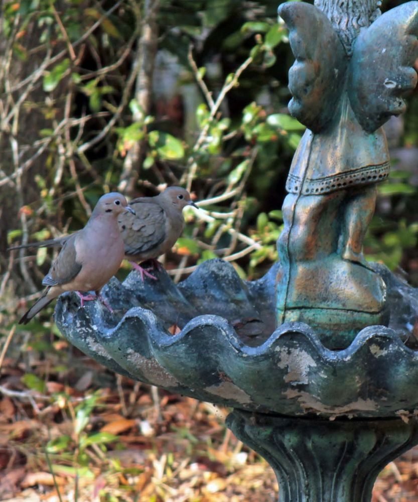 A pair of doves by Linda L. Offen