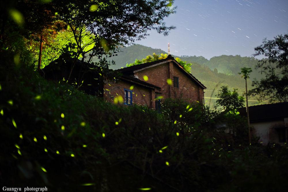 Firefly by guangyu_Ch