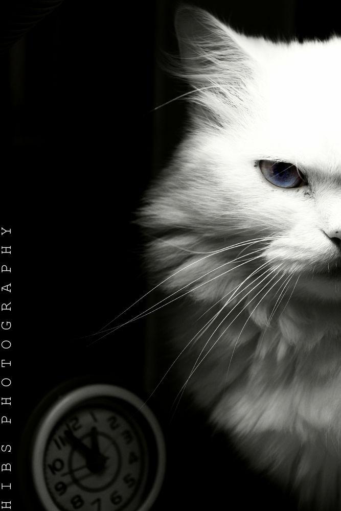katty by hebaadel2012