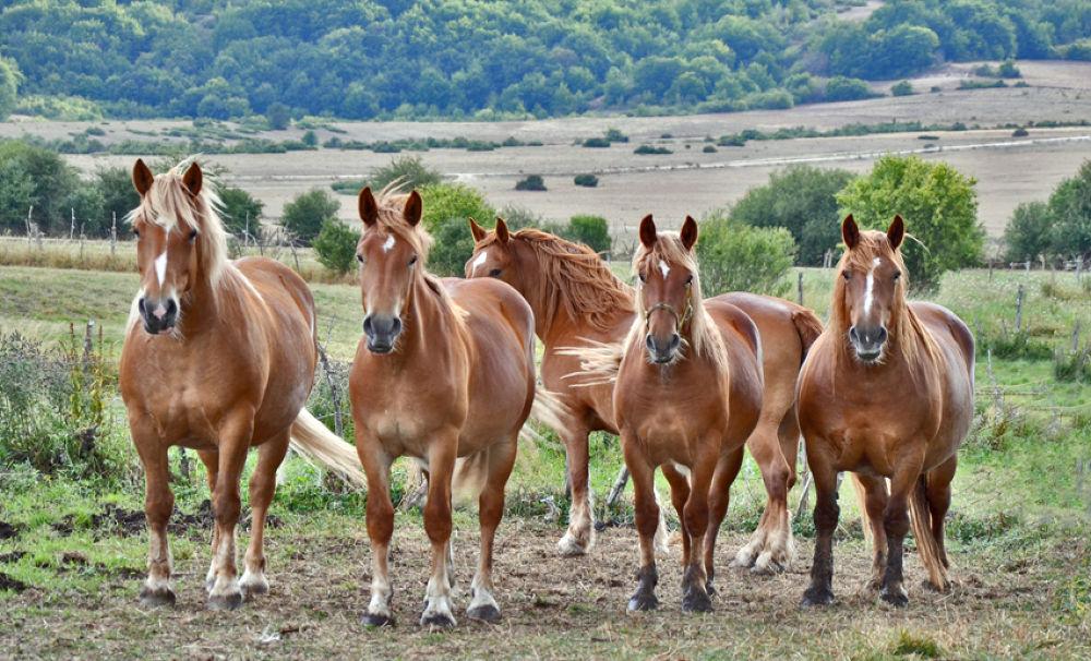Photo in Random #italian draft horse