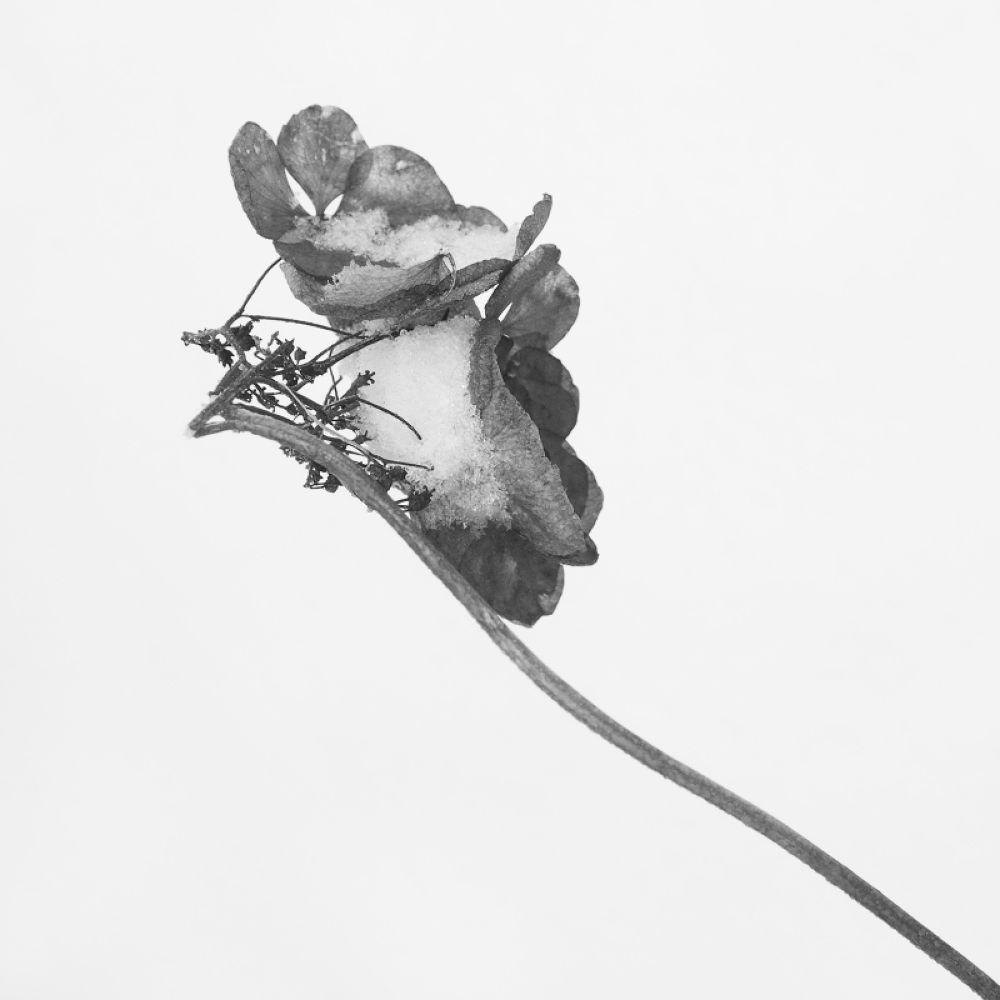 fleur nb by leotempo