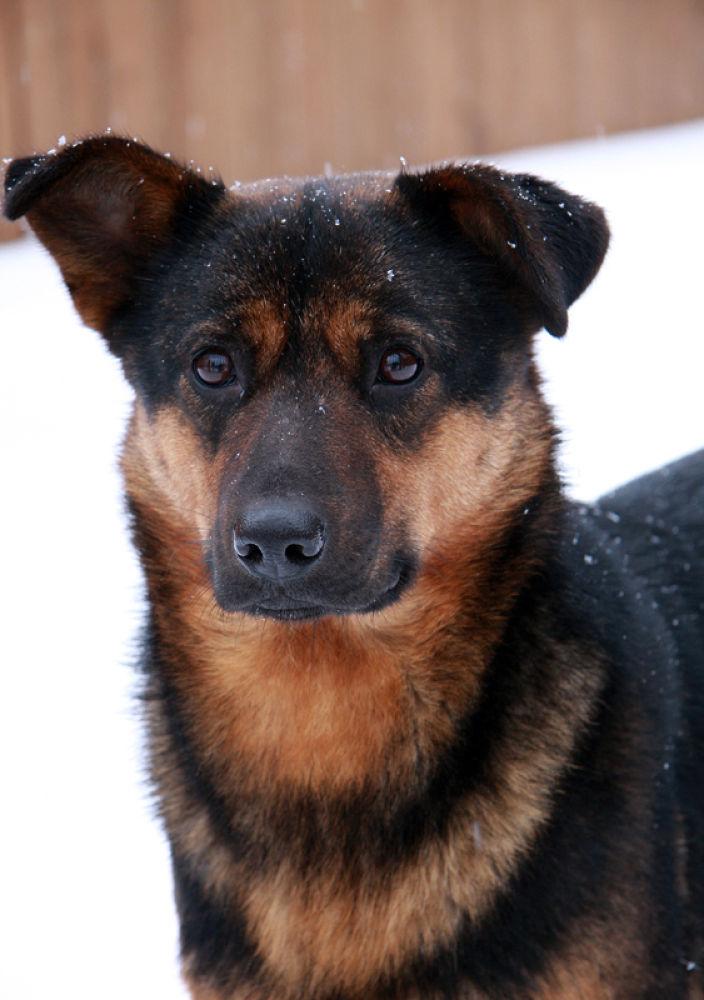 Photo in Animal #russia #dog #homeless #friend #canon #rusova anna #animal #rusova_anna