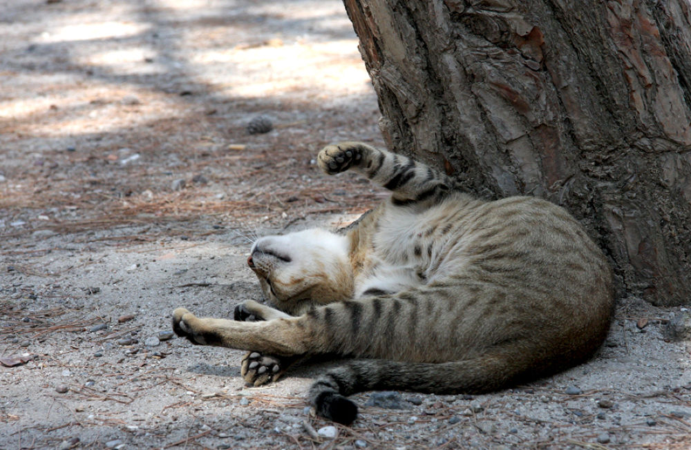 Photo in Animal #greece #island #kos #cat #rest #cute #lie #funny #amusing #canon #rusova anna #rusova_anna