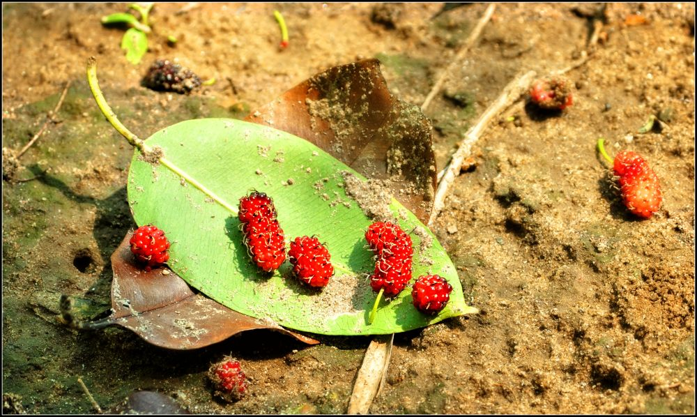 Bangladeshi Berries by tayearchowdhury
