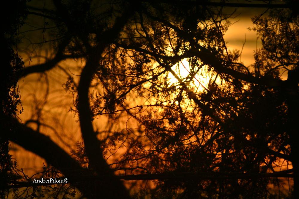 DSC_2615 by ஜAndrei Lucian Piloiuஜ
