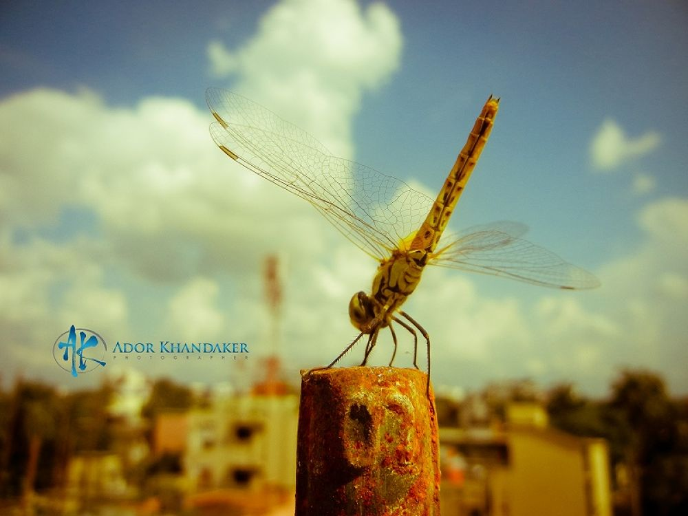 Deagon Fly by Khandaker Almas Mahmud Ador