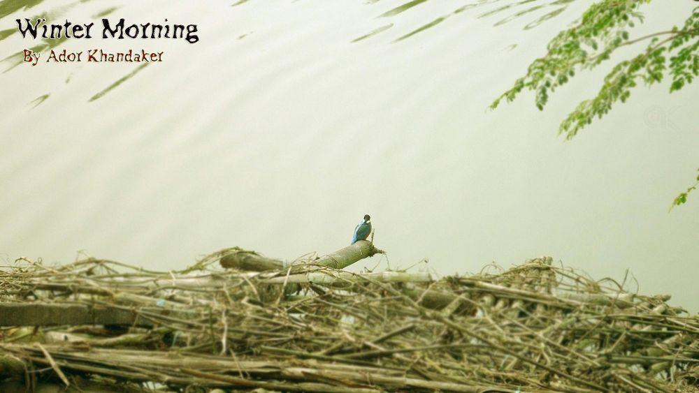 King_Fisher by Khandaker Almas Mahmud Ador