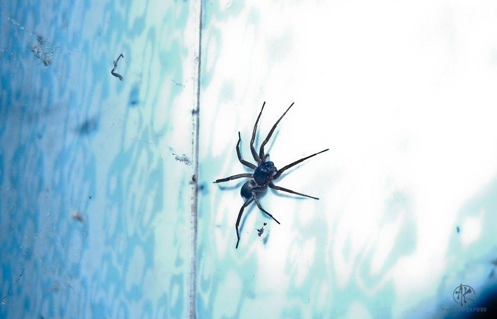 8 legs Spider is very Dangerous............  by Khandaker Almas Mahmud Ador
