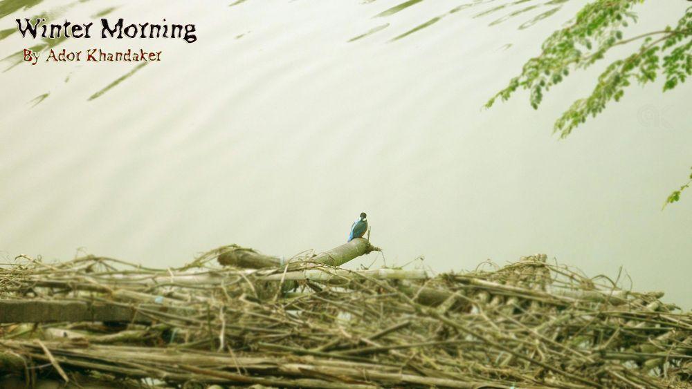 The king_Fisher......hunting fishes............. by Khandaker Almas Mahmud Ador