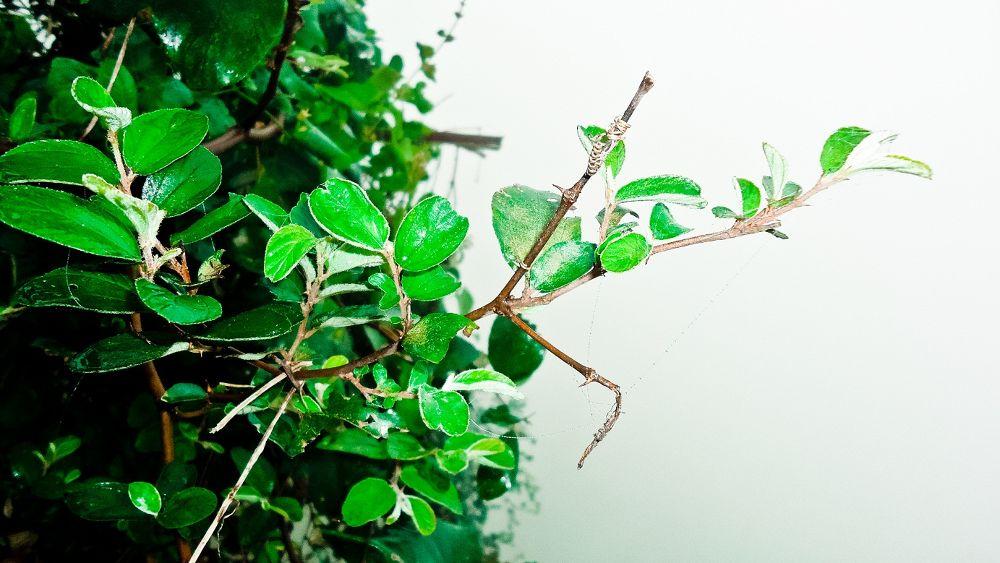 Leaf are green.......... by Khandaker Almas Mahmud Ador
