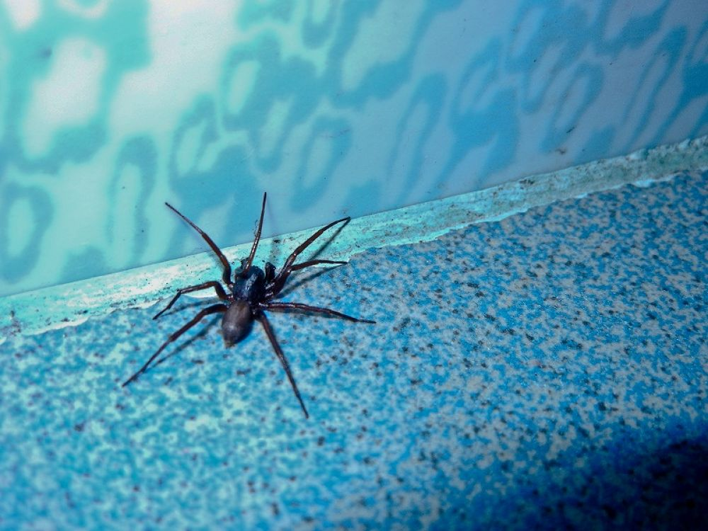 Dangerous Spider............with 8 legs............... by Khandaker Almas Mahmud Ador