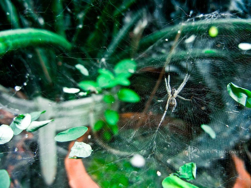 Photo in Animal #burg kasteel slot burcht #animal #nature #wildlife #land