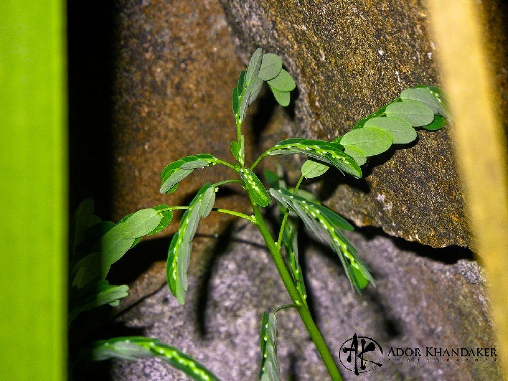 The little Tree.................... by Khandaker Almas Mahmud Ador